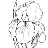 Spring Flower, Image Of Spring Flower Coloring Page: Image of Spring Flower Coloring Page