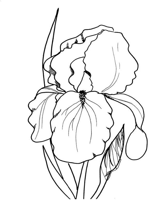 Spring Flower, : Image of Spring Flower Coloring Page