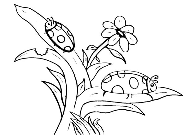 Nature, : Ladybug on Leaf of Nature Coloring Page