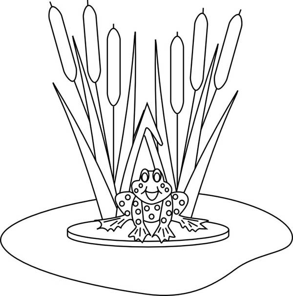 Lily Pad, : Lily Pad Hide and Sit on Lily Pad Coloring PageColoring Page