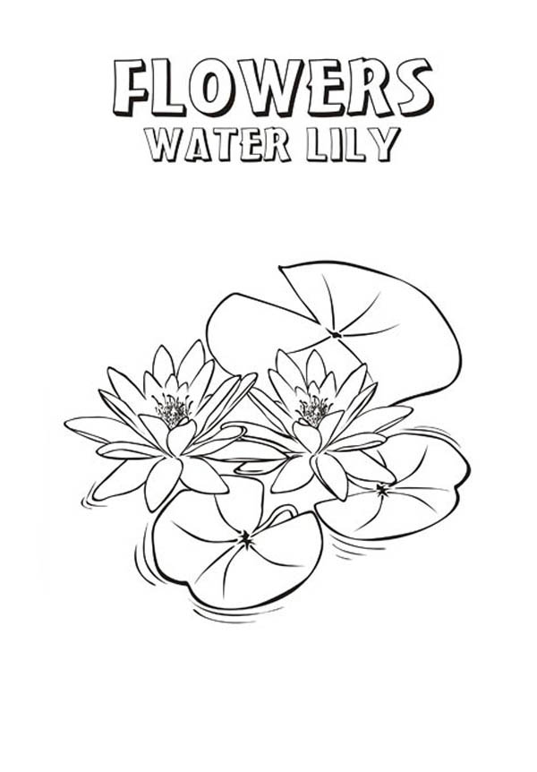 Lily Pad, : Lily Pad Picture Coloring Page