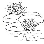 Lily Pad, Lily Pad And Blooming Water Lily Coloring Page: Lily Pad and Blooming Water Lily Coloring Page