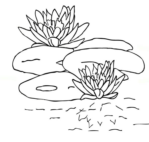 Lily Pad, : Lily Pad and Blooming Water Lily Coloring Page