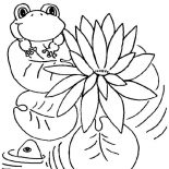 Lily Pad, Lily Pad And Frog Coloring Page: Lily Pad and Frog Coloring Page