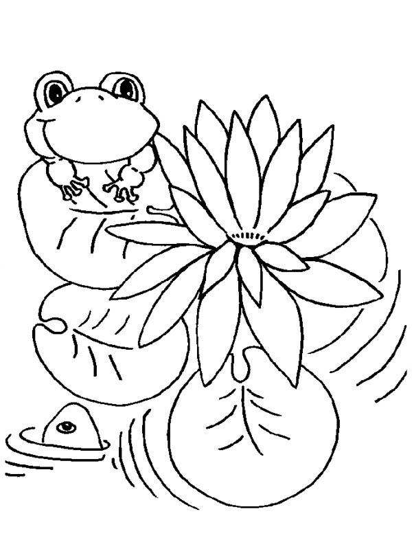 Lily Pad, : Lily Pad and Frog Coloring Page