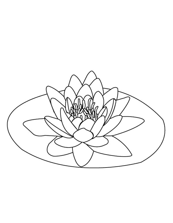 Lily Pad, : Lily Pad on the Middle of Pond Coloring Page