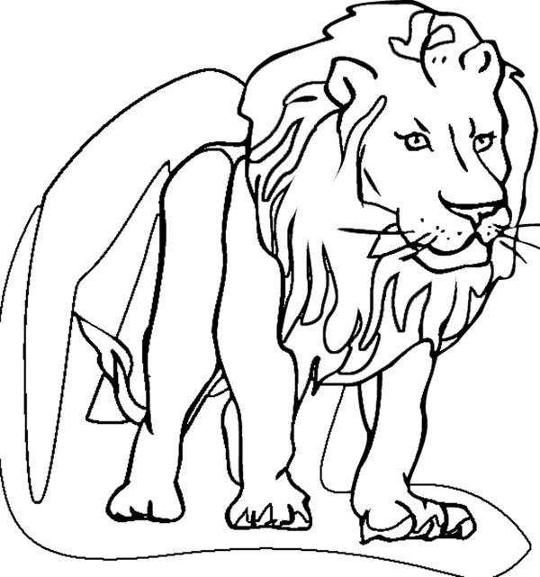 Lion, : Lion Coloring Page for Kids