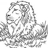 Lion, Lion Observe His Prey Coloring Page: Lion Observe His Prey Coloring Page