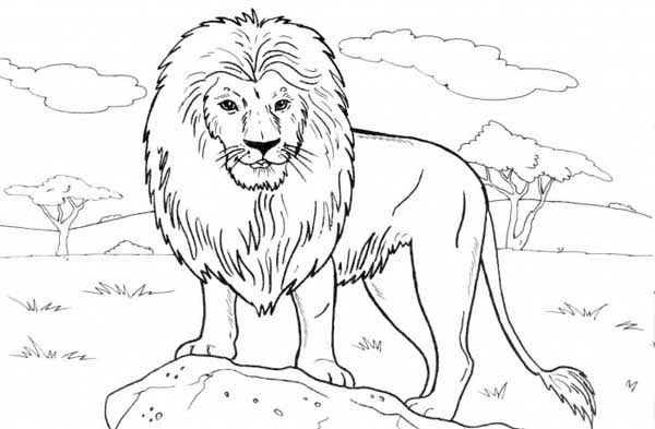 Lion, : Lion Standing on a Rock Coloring Page