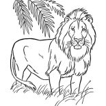 Lion, Lion The King Of Animals Coloring Page: Lion the King of Animals Coloring Page