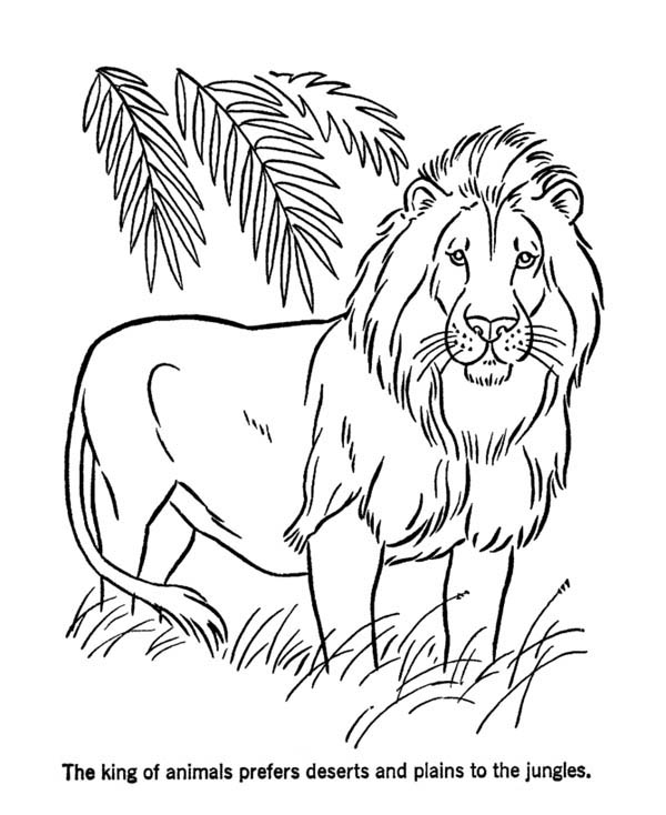 Lion, : Lion the King of Animals Coloring Page