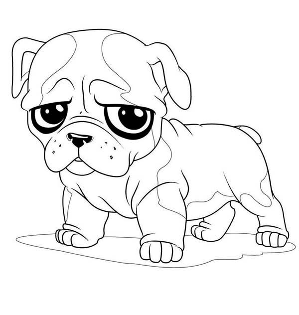 Pug, : Little Pug Sad Face Coloring Page
