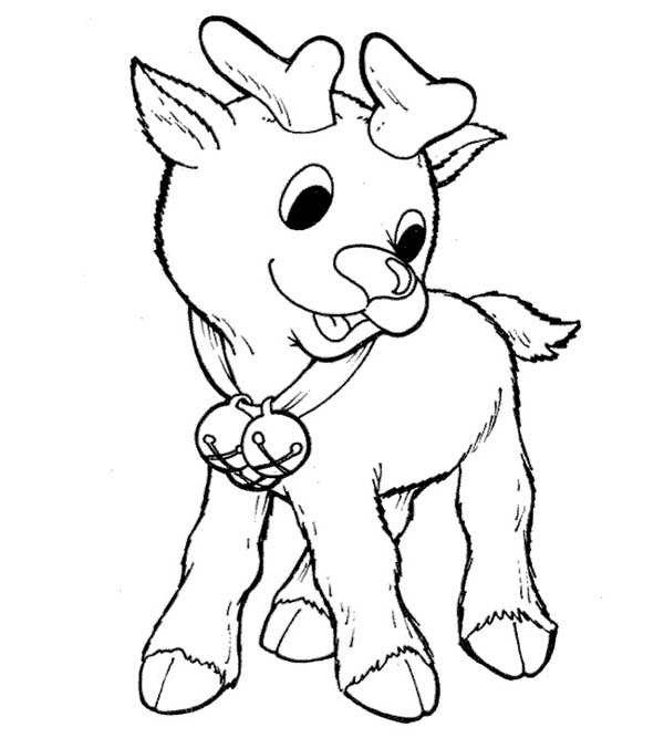 Rudolph, : Little Rudolph the Red Nosed Reindeer Coloring Page