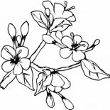 Spring Flower, Lovely Spring Flower In Blossom Coloring Page: Lovely Spring Flower in Blossom Coloring Page