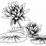 Lily Pad, Photo Of Lily Pad Coloring Page: Photo of Lily Pad Coloring Page