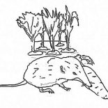 Possum, Possum Eating Carrot Coloring Page: Possum Eating Carrot Coloring Page