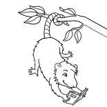 Possum, Possum Reading A Book Coloring Page: Possum Reading a Book Coloring Page