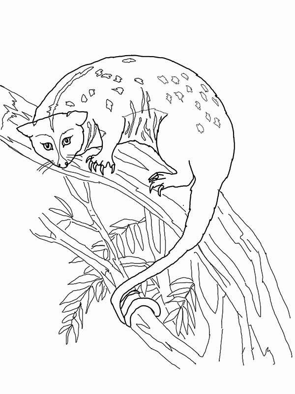 Possum, : Possum Up on Tree Coloring Page