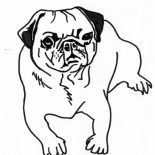 Pug, Pug Dog Coloring Page: Pug Dog Coloring Page