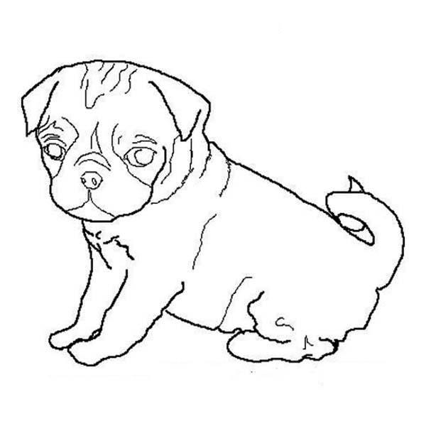 Pug, : Pug Dog Outline Coloring Page