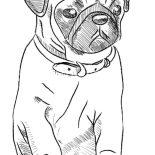 Pug, Pug Dog Skecth Coloring Page: Pug Dog Skecth Coloring Page