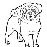 Pug, Pug Funny Face Coloring Page: Pug Funny Face Coloring Page