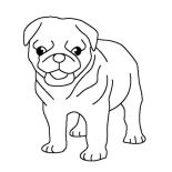 Pug, Pug Puppy Coloring Page: Pug Puppy Coloring Page