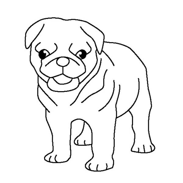 Pug, : Pug Puppy Coloring Page