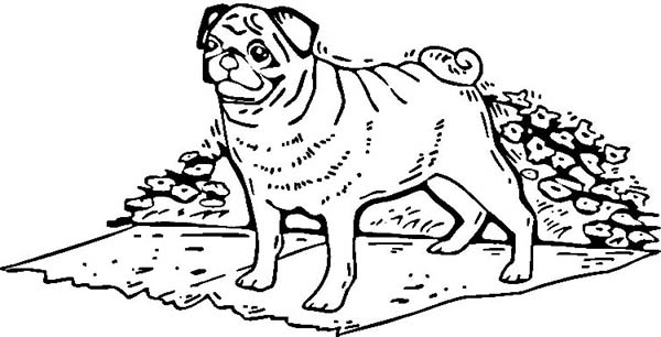 Pug, : Pug Standing in Front of Flower Garden Coloring Page