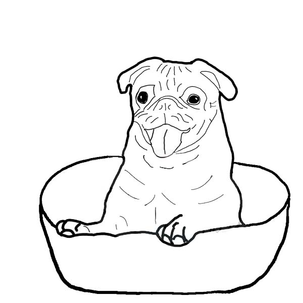 Pug, : Pug is Happy Inside a Bowl Coloring Page