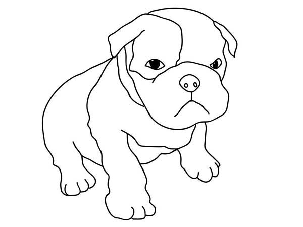Pug, : Pug is not in the Mood Coloring Page