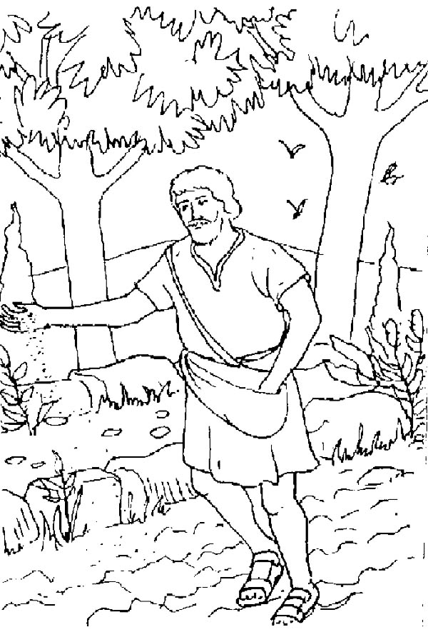 Parable of the Sower, : Realistic Picture of Parable of the Sower Coloring Page