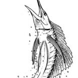 Swordfish, Sailfish Is A Swordfish Coloring Page: Sailfish is a Swordfish Coloring Page