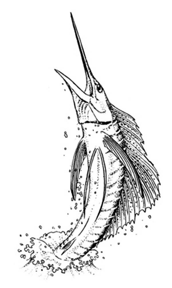 Sailfish Is A Swordfish Coloring