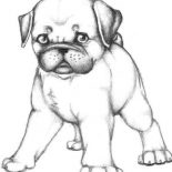 Pug, Skecth Of Pug Dog Coloring Page: Skecth of Pug Dog Coloring Page