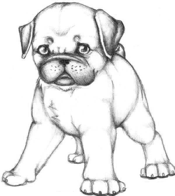 Pug, : Skecth of Pug Dog Coloring Page
