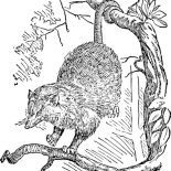 Possum, Sketch Of A Possum Coloring Page: Sketch of a Possum Coloring Page