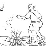 Parable of the Sower, Some Seed Fall Into Rocky Place In Parable Of The Sower Coloring Page: Some Seed Fall into Rocky Place in Parable of the Sower Coloring Page