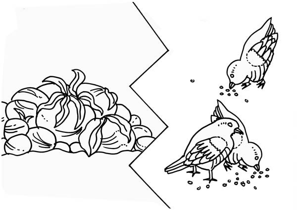Parable of the Sower, : Some Seed was Eaten by Birds in Parable of the Sower Coloring Page