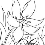 Spring Flower, Spring Flower Begin To Bloom Coloring Page: Spring Flower Begin to Bloom Coloring Page