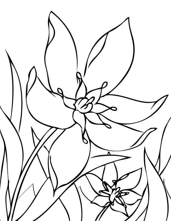 Spring Flower, : Spring Flower Begin to Bloom Coloring Page