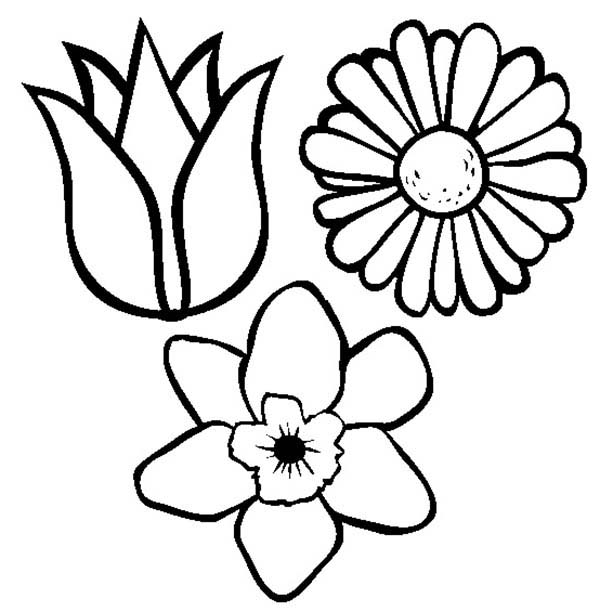 Spring Flower, : Spring Flower Coloring Page for Kids