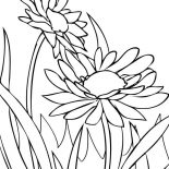 Spring Flower, Spring Flower Daisy Coloring Page: Spring Flower Daisy Coloring Page