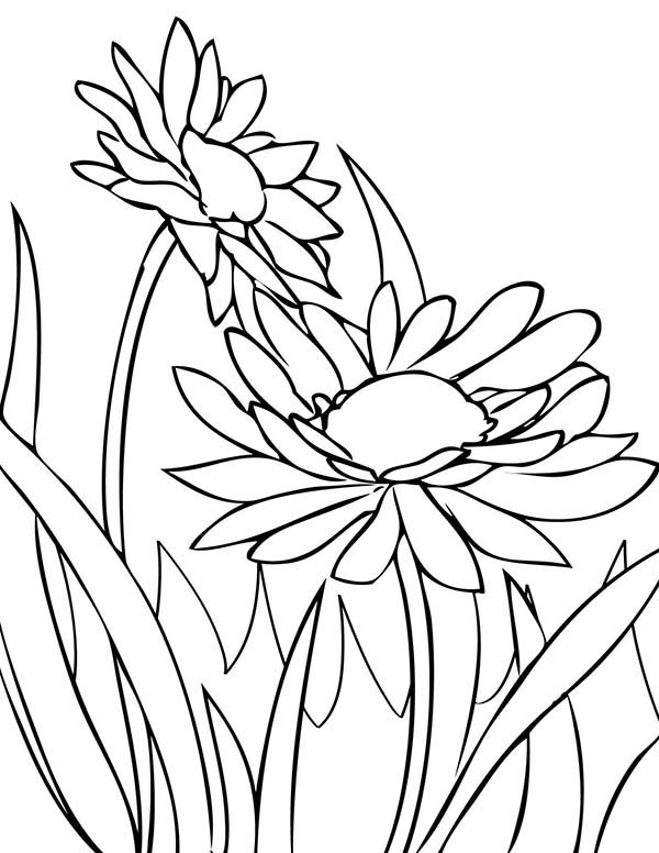 Spring Flower, : Spring Flower Daisy Coloring Page