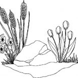 Spring Flower, Spring Flower Grow Between A Rock Coloring Page: Spring Flower Grow Between a Rock Coloring Page