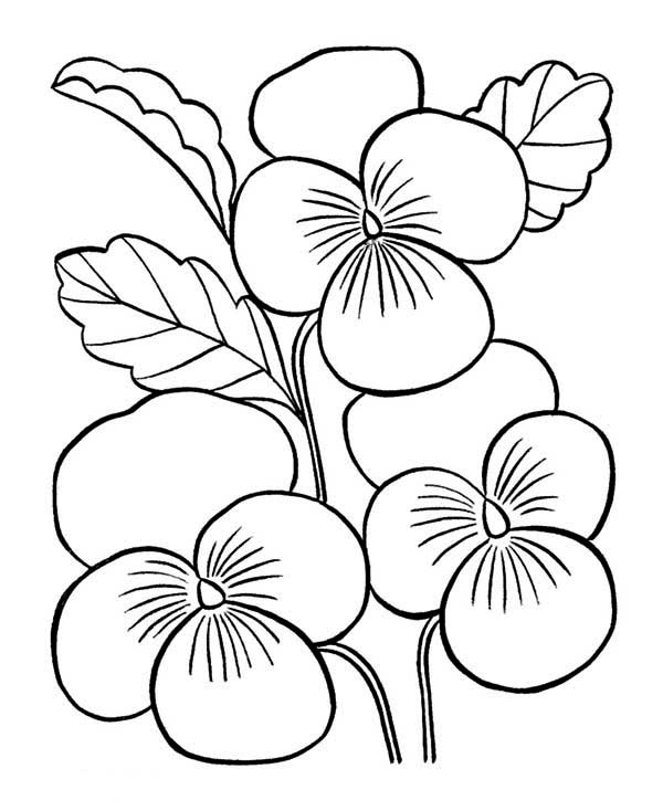Spring Flower, : Spring Flower for Love Ones Coloring Page