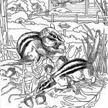 Nature, Squirrel Eat Pine Fruit Of Nature Coloring Page: Squirrel Eat Pine Fruit of Nature Coloring Page