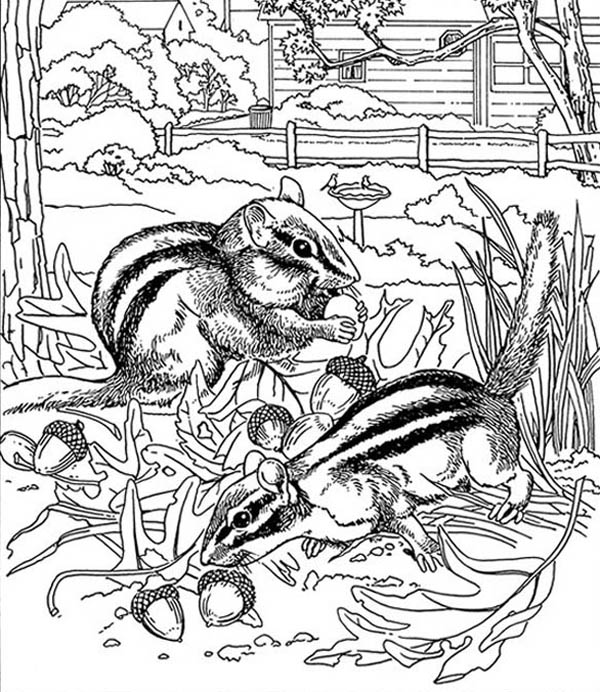 Nature, : Squirrel Eat Pine Fruit of Nature Coloring Page
