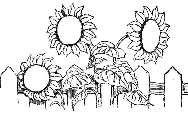 Spring Flower, : Sun Flower Over the Fence Spring Flower Coloring Page