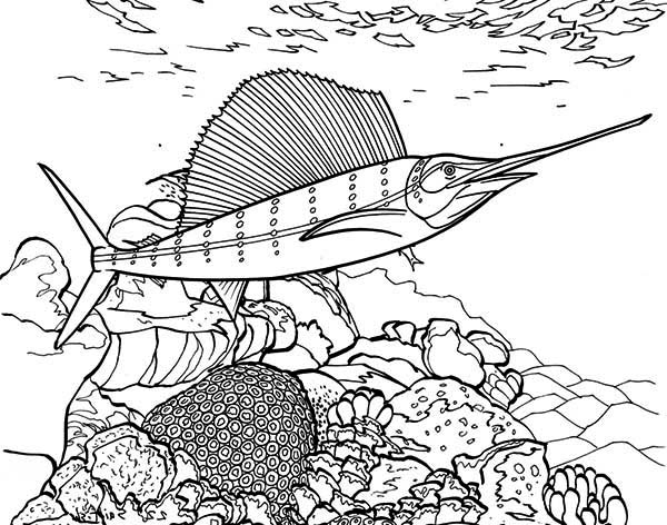 coral reef coloring book pages - photo#33